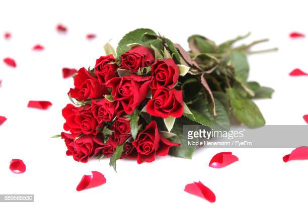 Close-Up Of Red Roses On White Background