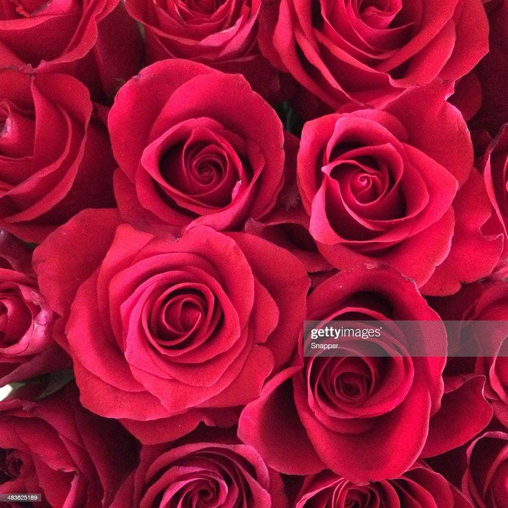Close -up of 赤いバラ : ストックフォト