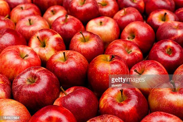 close-up of red royal gala apples - rood stockfoto's en -beelden