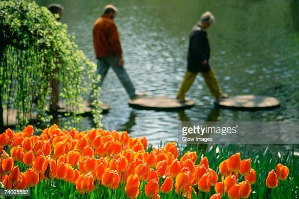 close-up of red tulips in a garden, keukenhof gardens, lisse, netherlands - keukenhof gardens stockfoto's en -beelden