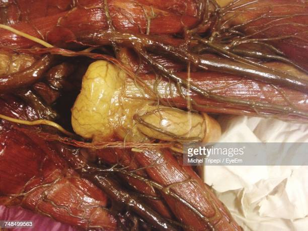 close-up of reproductive system - foreskin stock pictures, royalty-free photos & images