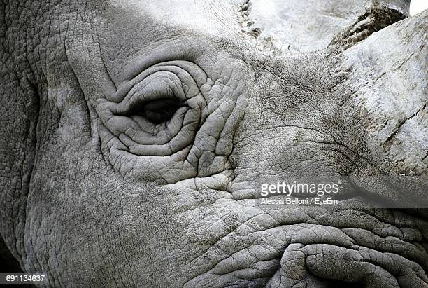 Close-Up Of Rhinoceros