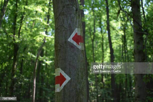 Close-Up Of Road Sign In Forest
