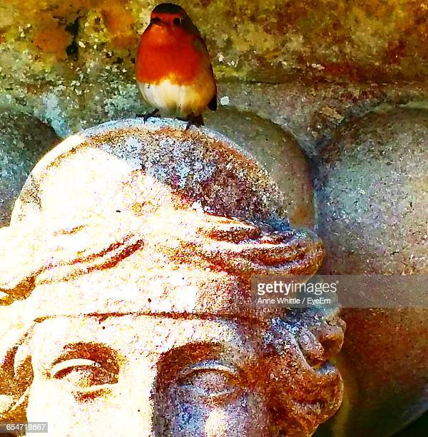 Close-Up Of Robin Perching On Sculpture