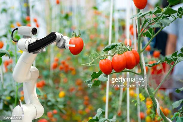 close-up of robotic arm holding tomato - agriculture stock pictures, royalty-free photos & images