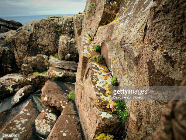 close-up of rock formation on cliff - david cliff stock pictures, royalty-free photos & images