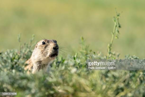 Close-Up Of Rodent Amidst Plants