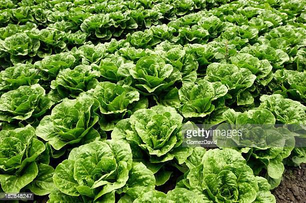 r mischer salat stock fotos und bilder getty images