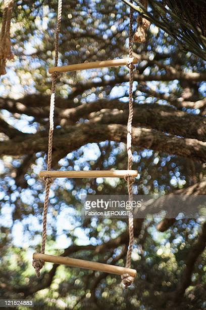 Close-up of rope ladder hanging from tree
