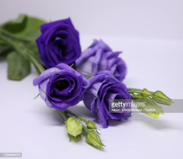 close-up of rose bouquet against white background - purple roses bouquet ストックフォトと画像