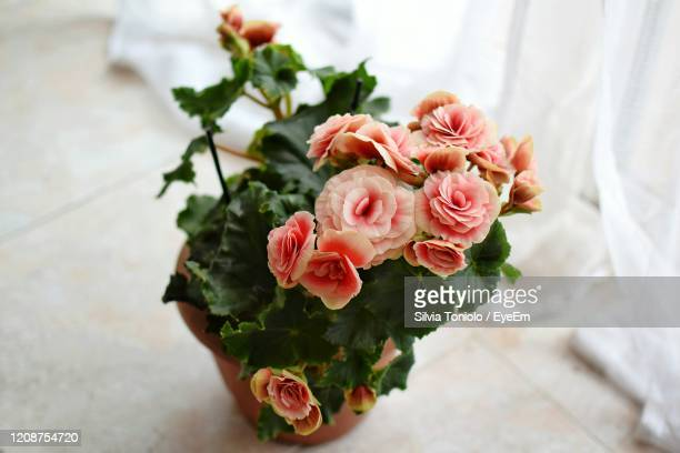 close-up of rose bouquet - begonia stock pictures, royalty-free photos & images