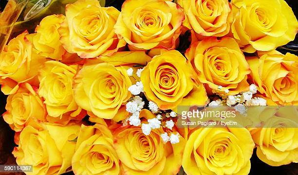 close-up of rose bouquet - yellow roses stock photos and pictures