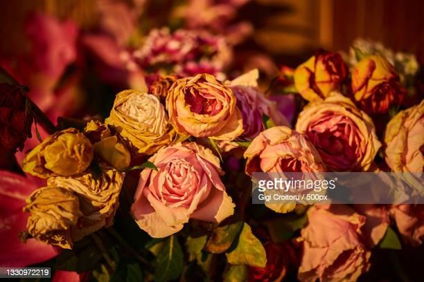 close-up of rose bouquet,northampton,united kingdom,uk - northampton stock pictures, royalty-free photos & images