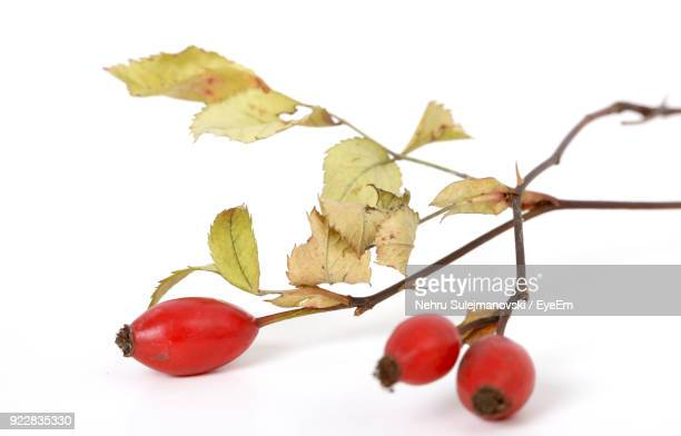 Close-Up Of Rose Hips Over White Background