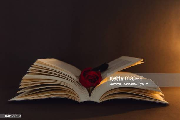 close-up of rose in book on table - roses catalonia stock pictures, royalty-free photos & images