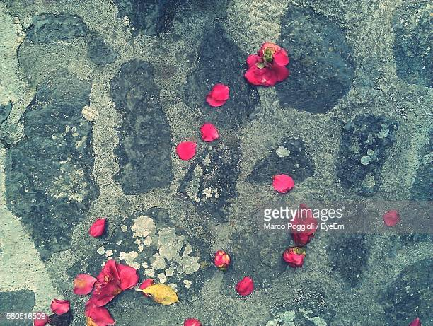 Close-Up Of Rose Petals On Ground