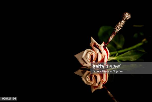 Black Rose With Blood Stock Photos And Pictures