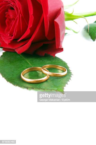 Close Up Of Rose With Wedding Rings On White Background