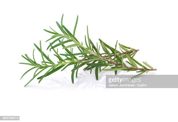 close-up of rosemary twigs over white background - ローズマリー ストックフォトと画像
