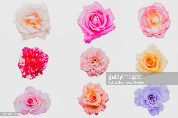 Close-Up Of Roses Arranged Against White Background