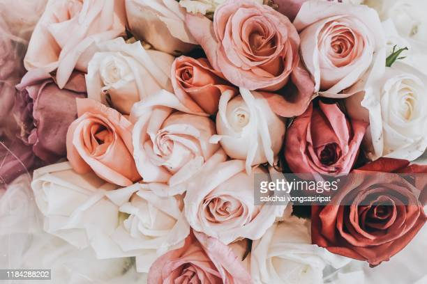 close-up of roses bouquet, thailand, asia - rose colored stock pictures, royalty-free photos & images