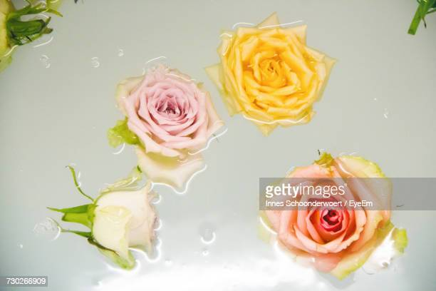 close-up of roses floating in water - 水に浮かぶ ストックフォトと画像