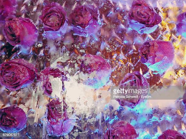 Close-Up Of Roses In Ice