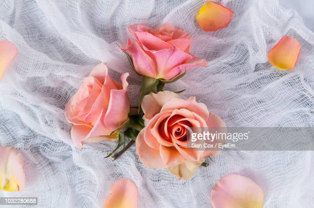 close-up of roses on net and marble - couleur corail photos et images de collection