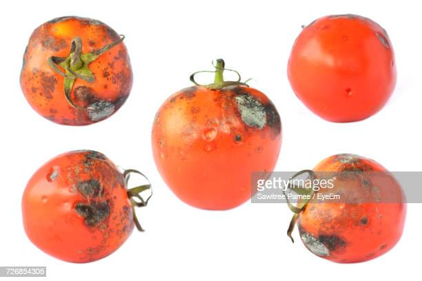 close-up of rotten tomatoes on white background - rot stock pictures, royalty-free photos & images