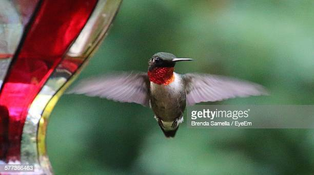 Close-Up Of Ruby-Throated Hummingbird Perching On Branch