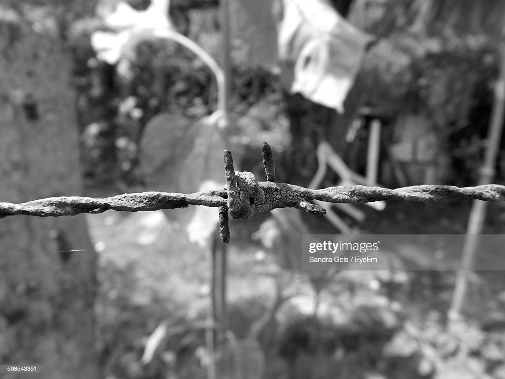 Close-Up Of Rusty Barb Wire In Yard : Stock Photo