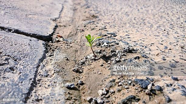 close-up of sapling on ground - nazar stock photos and pictures