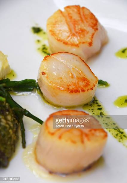 close-up of scallop served in plate - scallop stock photos and pictures