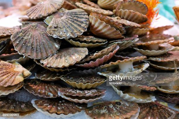 Close-up of scallops at fish market