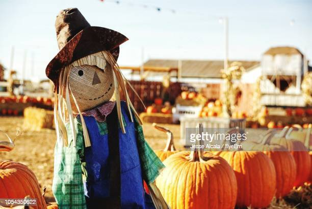 close-up of scarecrow by pumpkins - scarecrow agricultural equipment stock photos and pictures