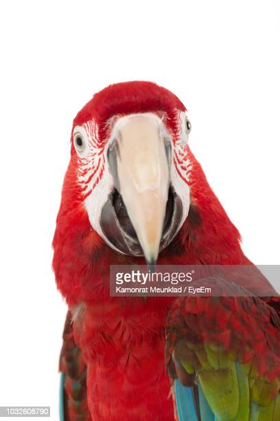 close-up of scarlet macaw against white background - parrot stock pictures, royalty-free photos & images