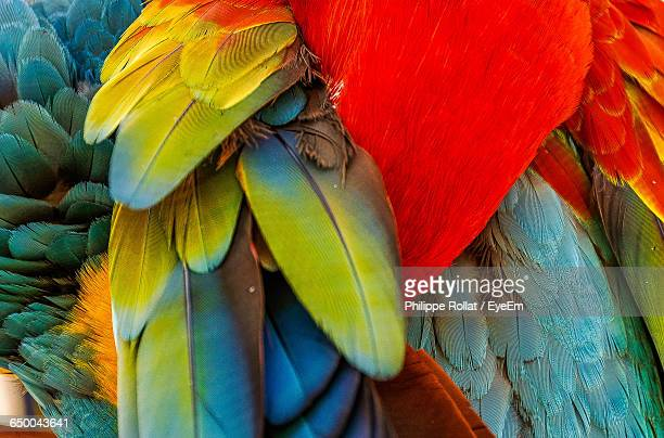 Close-Up Of Scarlet Macaw
