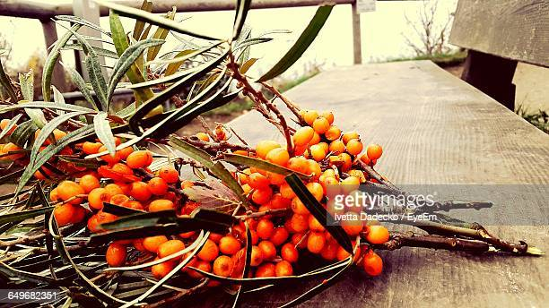 Close-Up Of Sea Buckthorn On Bench