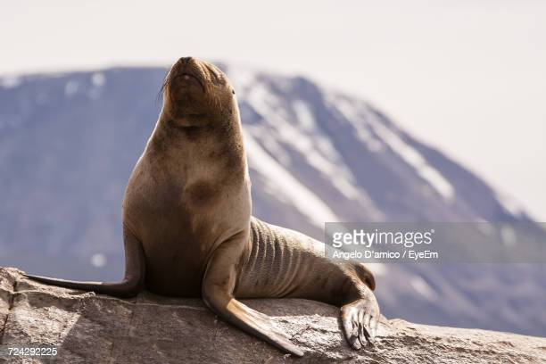Close-Up Of Sea Lion In The Wild
