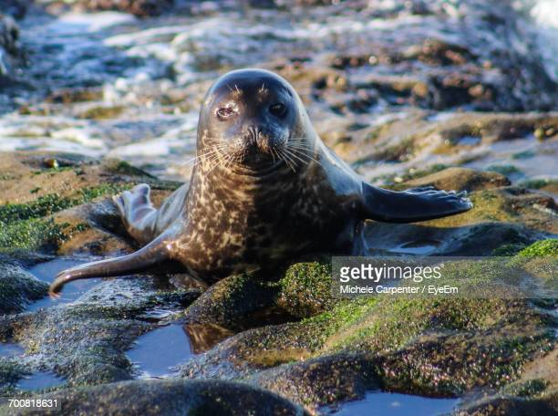 Close-Up Of Sea Lion On Beach