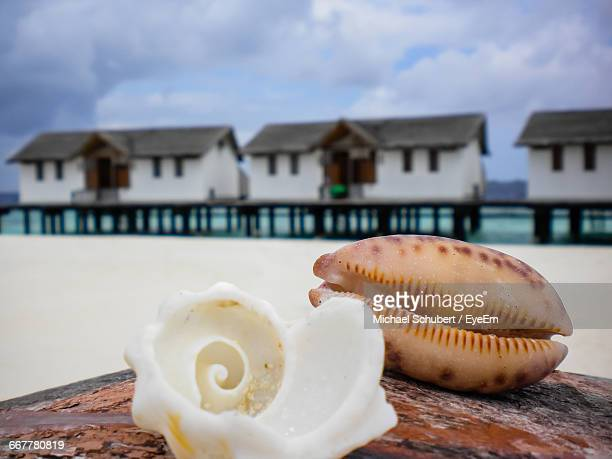 Close-Up Of Sea Shells With Beach Houses In Background