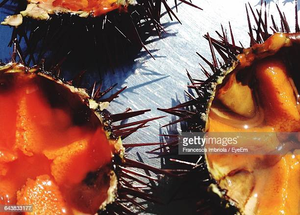 Close-Up Of Sea Urchins Served In Plate