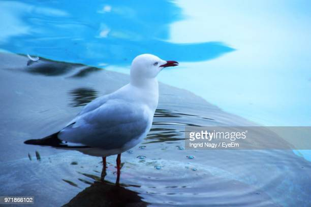 Close-Up Of Seagull Perching In Sea
