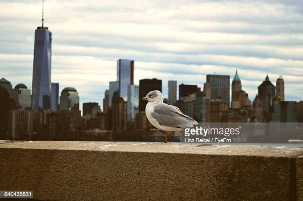 Close-Up Of Seagull Perching On Retaining Wall Against Cityscape