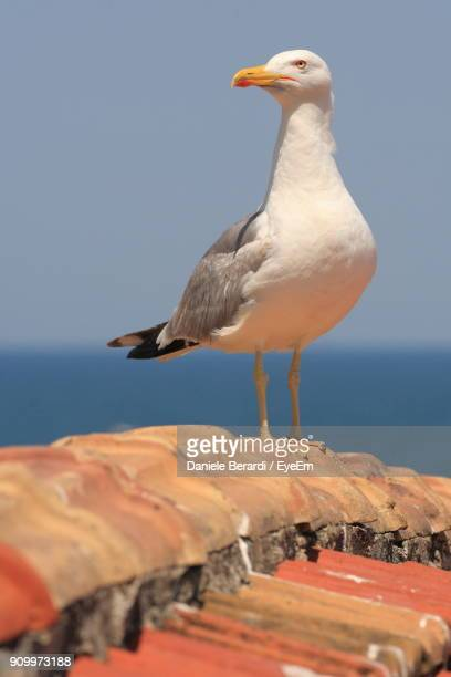 Close-Up Of Seagull Perching On Roof Against Sky