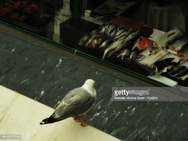 close-up of seagull perching on roof with fish for sale in background - perch fish stock pictures, royalty-free photos & images