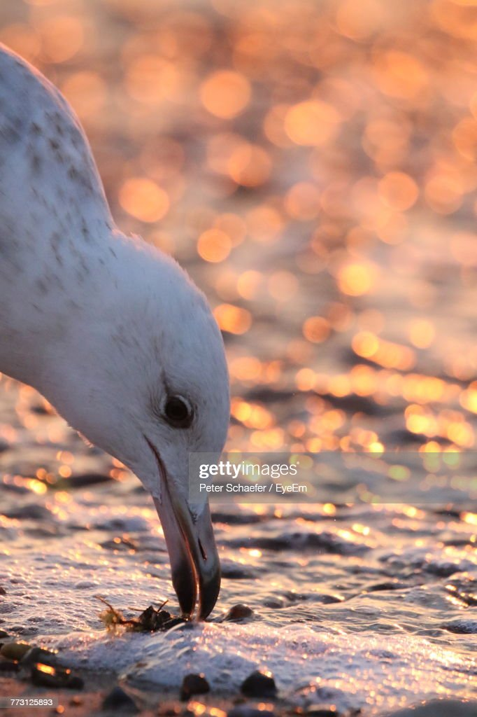 Close-Up Of Seagull Perching On Shore : Photo