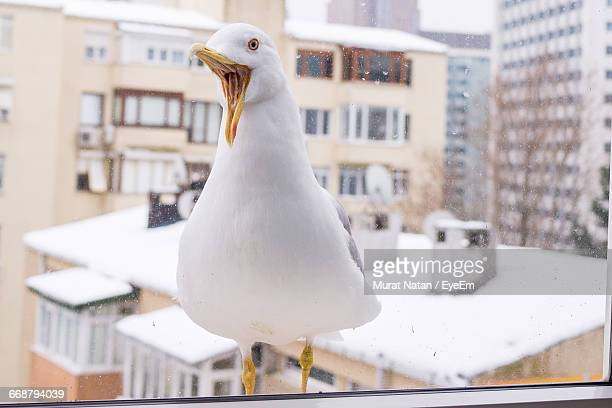 Close-Up Of Seagull Seen Through Glass Window