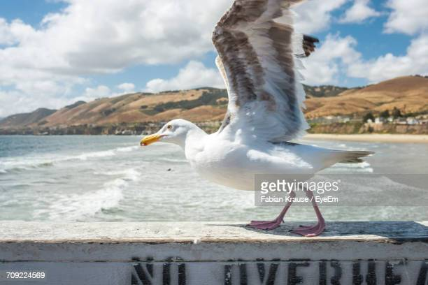 close-up of seagull with spread wings on railing by sea against cloudy sky - ピスモビーチ ストックフォトと画像