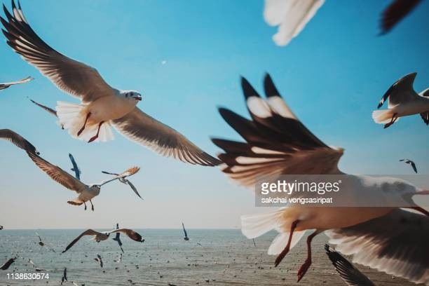 close-up of seagulls above sea against sky, thailand - seagull stock pictures, royalty-free photos & images